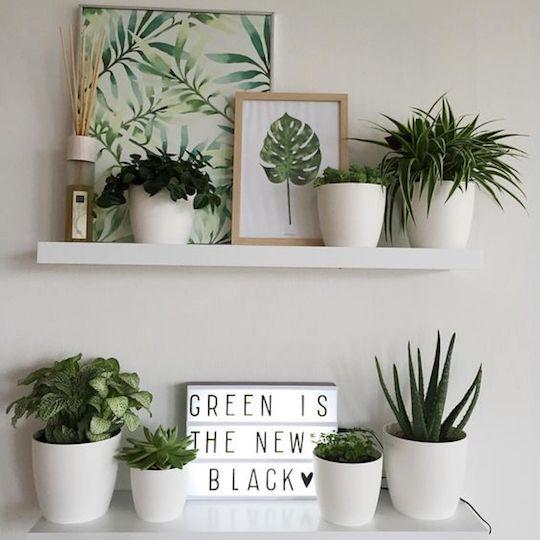 Green is the new black - indoor plants-2
